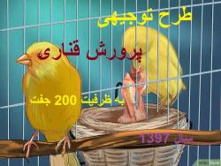 طرح توجیهی پرورش پرندگان زینتی(قناری) با ظرفیت 200 جفت سال 97